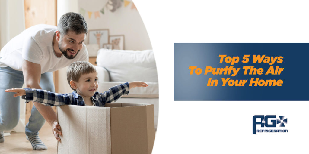 Top 5 Ways to Purify the Air in Your Home