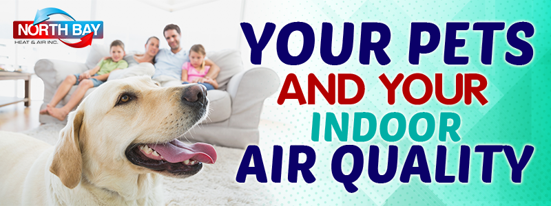 Your Pets And Your Indoor Air Quality